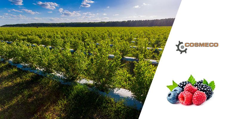 Macchinari per la coltivazione frutti di bosco